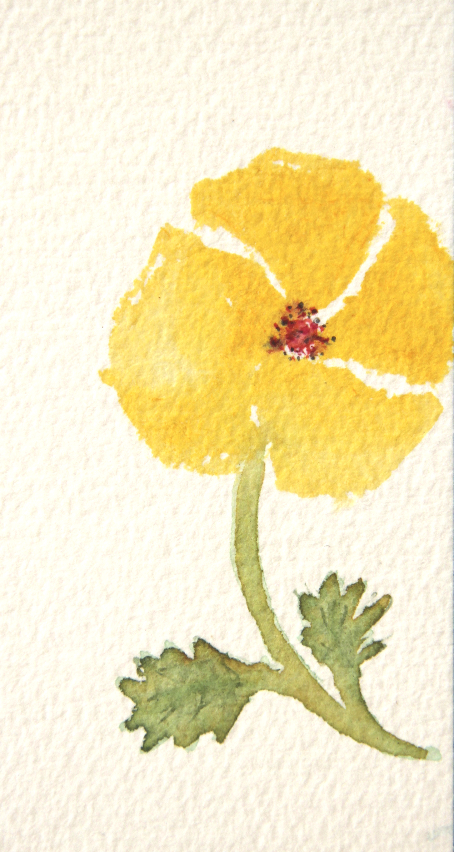 yellow poppies | Watercolors by Susan Medyn